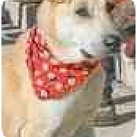 Adopt A Pet :: Quinn - Alexandria, VA