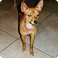 Adopt A Pet :: Jewel - Silsbee, TX