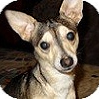 Adopt A Pet :: Corky - Hamilton, ON