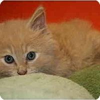 Adopt A Pet :: DARREN - SILVER SPRING, MD