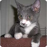 Adopt A Pet :: Dale - Richmond, VA