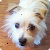 Adopt A Pet :: Cubby - Ball Ground, GA