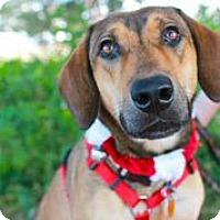 Adopt A Pet :: Sadie Mae - Austin, TX