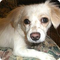 Adopt A Pet :: Emily - Foster, RI