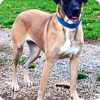 Adopt A Pet :: NORAH - Coudersport, PA