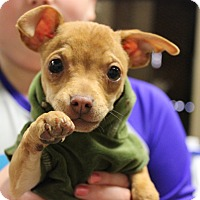 Adopt A Pet :: Malachi - Brattleboro, VT