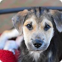 Adopt A Pet :: Ralphie - Baton Rouge, LA