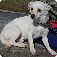 Adopt A Pet :: Buddy #2(13 lb) Needs Help! - Sussex, NJ