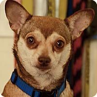 Adopt A Pet :: Carla - Pompano Beach, FL