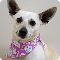 Adopt A Pet :: Pez - Dublin, CA