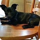 Adopt A Pet :: Poco