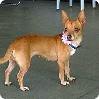 Adopt A Pet :: Maggie - Berkeley, CA