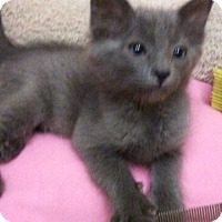 Adopt A Pet :: Tommy Tickles - Palm Springs, CA