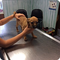 Adopt A Pet :: Otter - S. Pasedena, FL