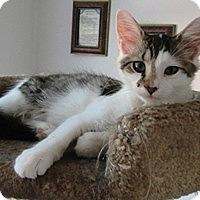 Adopt A Pet :: Rocket - Lebanon, PA