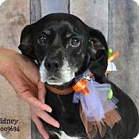 Adopt A Pet :: Sidney - Conroe, TX