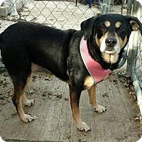 Adopt A Pet :: Laura - Hanna City, IL