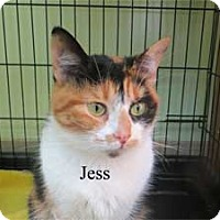 Adopt A Pet :: Jess - Warren, PA