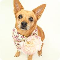 Adopt A Pet :: Pretty - Phoenix, AZ