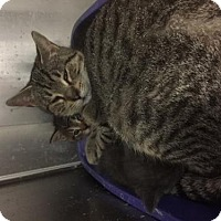 Adopt A Pet :: Noel and Kittens - Standish, MI