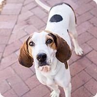 Adopt A Pet :: Betty - Washington, DC