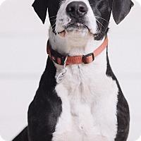 Adopt A Pet :: Lenny - Portland, OR