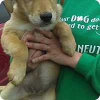 Adopt A Pet :: Max~ meet me! - Glastonbury, CT