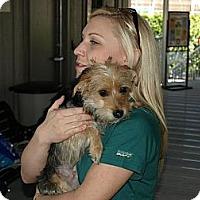 Adopt A Pet :: Abigail - Mission Viejo, CA