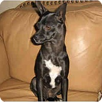 Adopt A Pet :: Gemma - Scottsdale, AZ