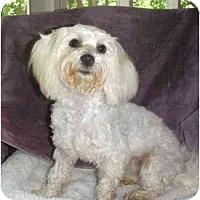 Adopt A Pet :: Livia - Mooy, AL