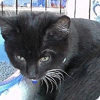 Adopt A Pet :: morris - Temecula, CA