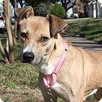 Adopt A Pet :: Sara - Justin, TX