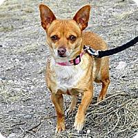 Adopt A Pet :: Juliet - Cheyenne, WY