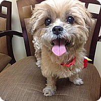 Adopt A Pet :: Cherie - Mission Viejo, CA