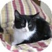 Adopt A Pet :: Miss Tux - Vancouver, BC