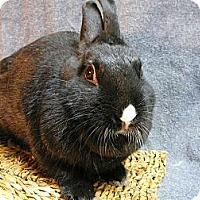 Adopt A Pet :: Dulcie - Newport, DE