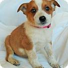 Adopt A Pet :: Emily