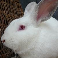 Adopt A Pet :: Reggie - Newport, DE