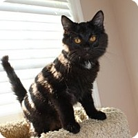 Adopt A Pet :: Meiko - Marietta, GA
