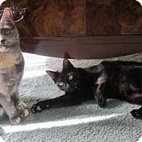 Adopt A Pet :: Louise - Lansdowne, PA