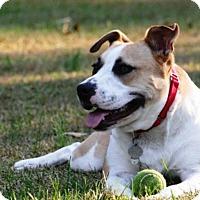 Adopt A Pet :: PastinaTeeny Bean-Adopted! - Turnersville, NJ