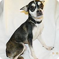 Adopt A Pet :: Tory - Umatilla, FL
