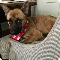 Adopt A Pet :: Bambi - Memphis, TN