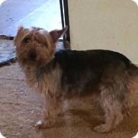 Adopt A Pet :: Stormy adoption pending - Manchester, CT
