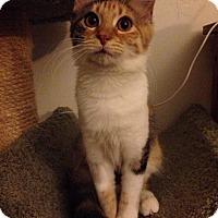 Adopt A Pet :: Kiska - Gainesville, FL