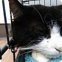 Adopt A Pet :: Alferd - Lake City, FL