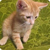 Adopt A Pet :: *MASON - Upper Marlboro, MD