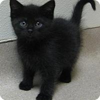 Adopt A Pet :: Tessa - Gary, IN