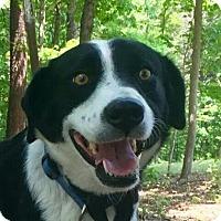 Adopt A Pet :: Addie - Harrisonburg, VA
