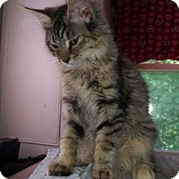 Adopt A Pet :: Wagner - Putnam, CT